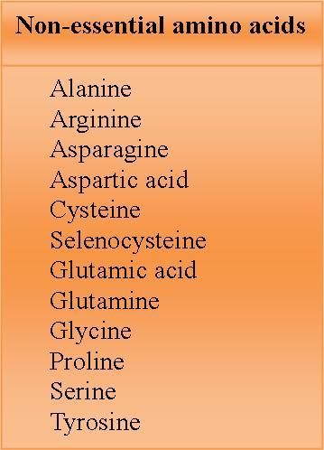Amino acids - non essential