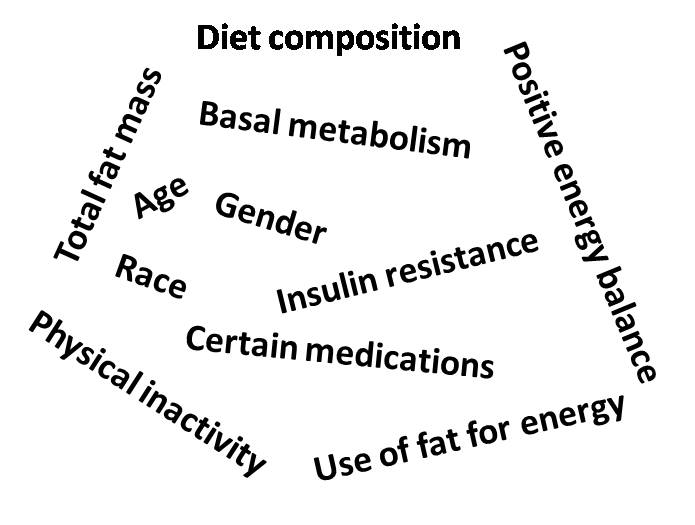 What promotes excess body fat